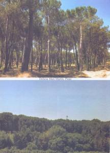 Pinar de la Dehesa de San Martín
