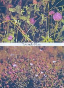 Flora de Navalcarnero. El Tochuelo.